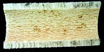 Obr. 4 Vnitřní povrch polypropylenové trubky po 6 letech dávkování ClO2
